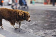 Gullig hund för liten rödhårig man Fotografering för Bildbyråer