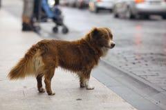 Gullig hund för liten rödhårig man Royaltyfri Fotografi