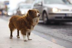 Gullig hund för liten rödhårig man Royaltyfria Bilder