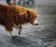 Gullig hund för liten rödhårig man Royaltyfri Foto