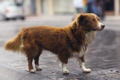 Gullig hund för liten rödhårig man Arkivbild