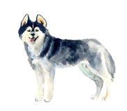 Gullig hund för vattenfärg Arkivbilder