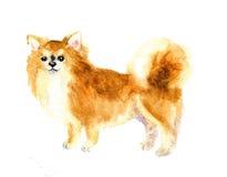 Gullig hund för vattenfärg Arkivbild