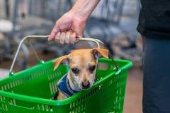 Gullig hund i en korg arkivfoton