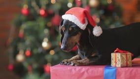 Gullig hund i en Santa Claus hatt arkivfilmer