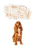 Gullig hund med att skälla bubblor Royaltyfria Foton
