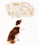 Gullig hund med att skälla bubblor arkivbilder