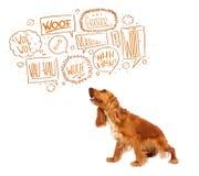 Gullig hund med att skälla bubblor Arkivfoto