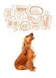 Gullig hund med att skälla bubblor Royaltyfri Bild