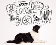 Gullig hund med att skälla bubblor Fotografering för Bildbyråer