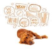 Gullig hund med att skälla bubblor Arkivbild