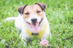 Gullig hund med blomman och ordförälskelse på hundetikett Arkivbild