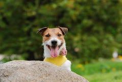 Gullig hund med blomman som ler och ser in i kamera Arkivfoton