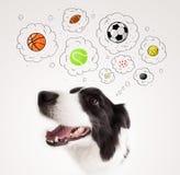 Gullig hund med bollar i tankebubblor arkivbild