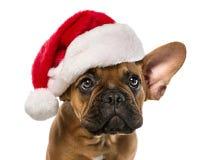 Gullig hund med den Santa Claus hatten Arkivbild