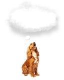 Gullig hund med den tomma molnbubblan Arkivfoto