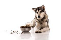 Gullig hund och hans favorit- torra mat på en vit bakgrund Arkivfoton