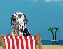 Gullig hund och katt som kopplar av på en röd solstol på stranden arkivfoto