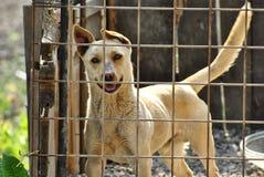 Gullig hund på hundskyddet Royaltyfria Bilder