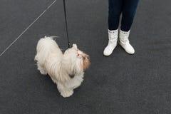 Gullig hund på Quattrozampeinfiera i Milan, Italien Arkivbilder