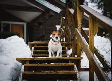 Gullig hund på stege av den bygdFinland stugan royaltyfria foton