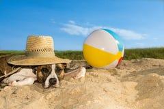 Gullig hund på stranden Royaltyfria Bilder