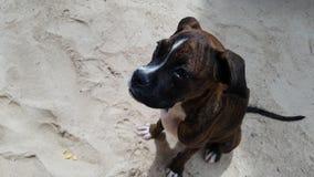 Gullig hund på stranden arkivfoton