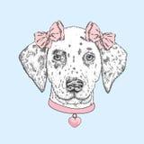 Gullig hund som bär en krage med en hjärta och två pilbågar Härlig dalmatian som målas av handen Vektorillustration för ett kort  vektor illustrationer