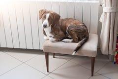 Gullig hund som hemma kopplar av och vilar royaltyfria bilder