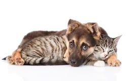 Gullig hund som omfamnar katten royaltyfri bild