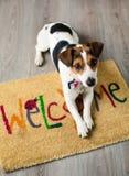 Gullig hund som poserar på mattan Fotografering för Bildbyråer