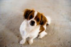 gullig hund som ser förlagen Fotografering för Bildbyråer