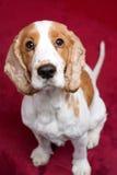gullig hund som ser upp Arkivbild