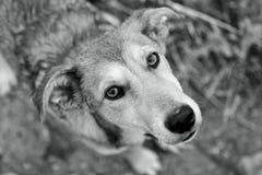 gullig hund som ser upp Royaltyfri Bild