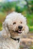 gullig hund som ser upp Arkivfoto