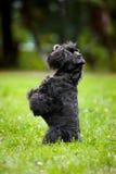 Gullig hund som sitter på hans hind ben Arkivbilder