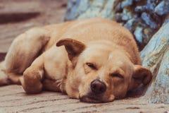 Gullig hund som sover på gatan arkivbild