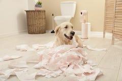 Gullig hund som spelar med toalettpapper i badrum arkivbild