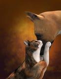 Gullig hundförälskelse Cat Illustration Arkivfoto