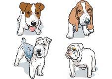 Gullig hundkapplöpning Royaltyfri Fotografi
