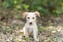 gullig hundvalp royaltyfri foto