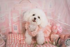 Gullig husdjurhund i rosa dröm arkivbild
