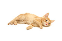 gullig ingefära isolerad kattungewhite arkivfoton