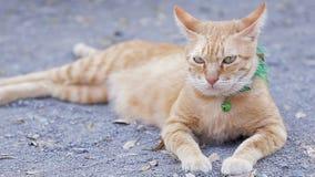 Gullig inhemsk katt som ligger på jordning Thailändsk orange och vit katt stock video
