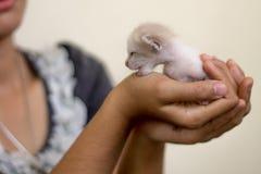 Gullig inhemsk nyf?dd kattunge royaltyfri foto