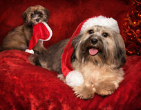 Gullig julHavanese hund och valp på hälsningkortdesign Royaltyfri Fotografi