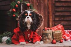 Gullig julhund med gåvor och garneringar på lantlig träbakgrund Royaltyfri Bild