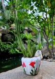 gullig kaktus Royaltyfri Bild