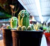 gullig kaktus Fotografering för Bildbyråer