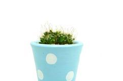 Gullig kaktuskruka Arkivfoto